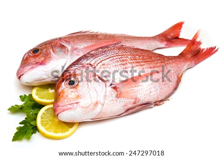 Raw porgy on white background - stock photo