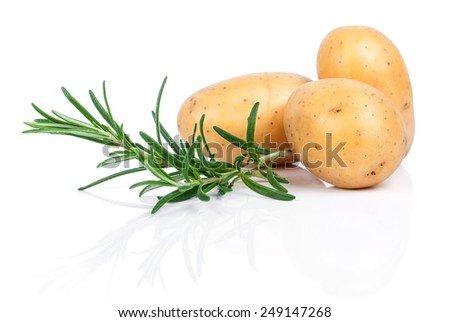 Raw potatoes with rosemary isolated on white background - stock photo