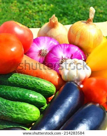 Raw, ripe, bright vegetables on the green grass - stock photo