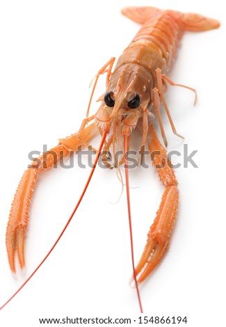 raw scampi isolated on white background - stock photo