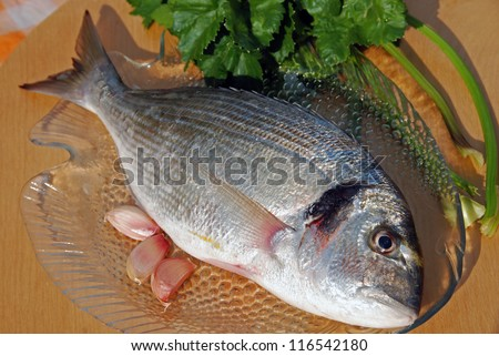 Raw sea bream on a fish tray with garlic and celery - stock photo
