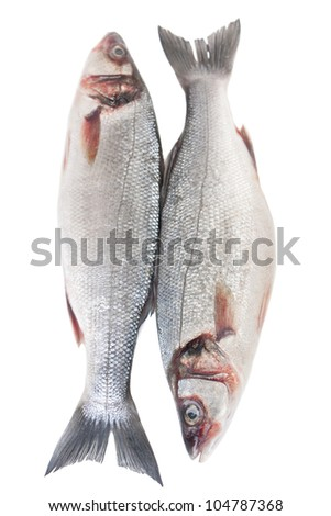 Raw seabass fish isolated on white background - stock photo