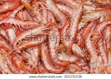 Raw seafood in fish market. - stock photo