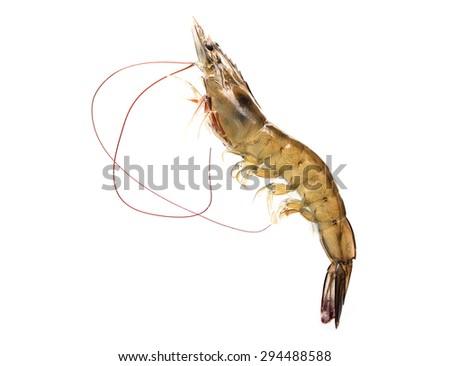 Raw shrimp is isolated on white background. - stock photo