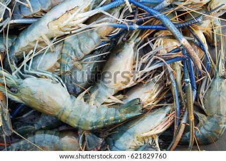 stock-photo-raw-shrimps-as-background-62