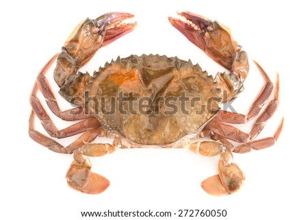 raw soft shell crab isolated on white background - stock photo