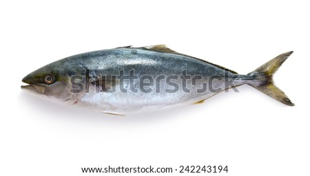 Raw tuna fish isolated on white background