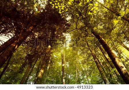 Ray of light in green forest