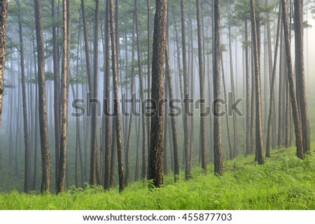 Ray, tree, fog and sunlight in morning in forest