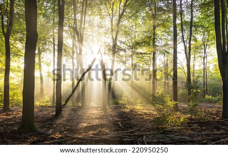 Rays of light in forrest