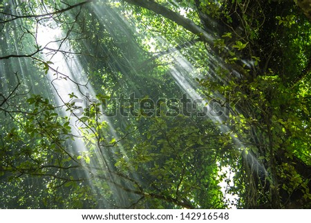 Rays of Light piercing Tropical Rainforest - stock photo