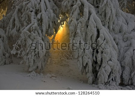 rays of light shows through between skolnennyh branches to the ground, covered with a thick layer of snow - stock photo