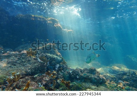 Rays of light underwater through the water surface viewed from the seabed on a reef with fish, Caribbean sea, natural scene - stock photo