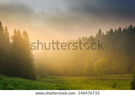 rays of the morning sun breaking through the clouds and fog to the clearing of coniferous forests