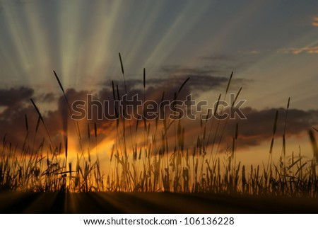 rays of the sun at sunset in the field - stock photo