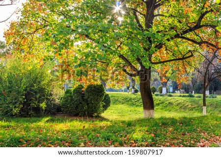 rays of the sun in the colorful leaves of trees in a city park in autumn