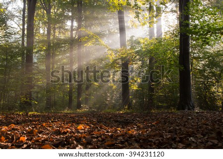 Rays of the sun in the forest