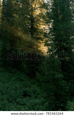 rays of the sun through the trees in the early morning, Altay, Siberia, Russia, Autumn