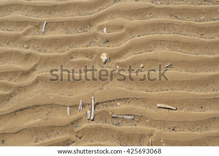 Razor shells on on sandy beach during low tide in Wells-next-the-sea, England - stock photo