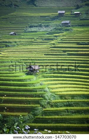 Rce terraces in northern Vietnam - stock photo