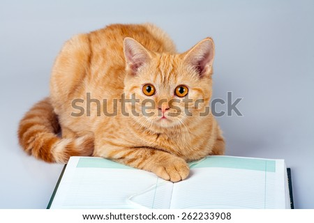 Reading business cat - stock photo