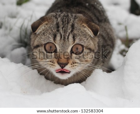 Ready to attack - stock photo
