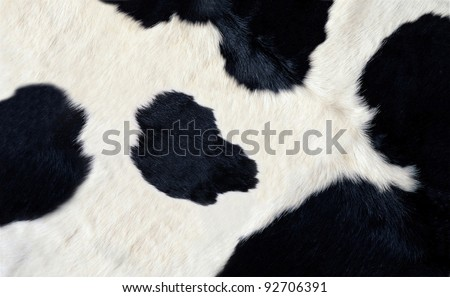 real black and white cow hide - stock photo