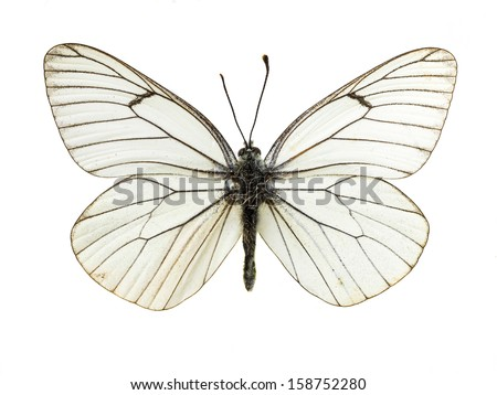 real colorful butterfly isolated in white background - stock photo