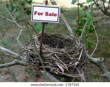 real estate market concept photo of a bird nest - stock photo