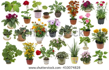 Real fresh houseplants and indoor flowers in ceramic and plastic pots  big set. Isolated on white - stock photo