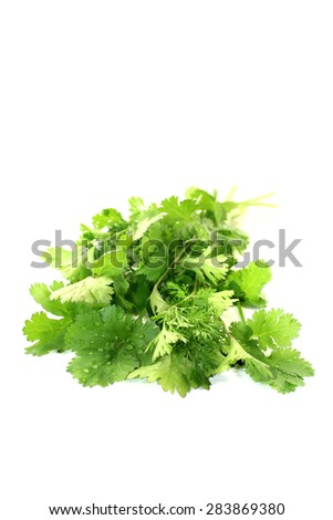 real green coriander on a light background - stock photo