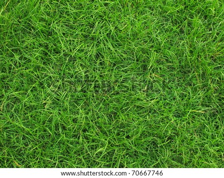 Real green grass background - stock photo