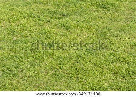 Real green grassland background with nobody. - stock photo