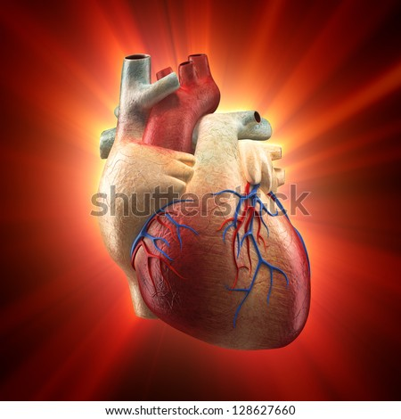 Real Heart Shinning in Light - Human Anatomy model - stock photo