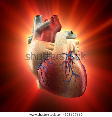 Real Heart Shinning Light Human Anatomy Stock Illustration 128627660