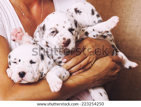 real human hand holding many puppies dalmatian close up - stock photo