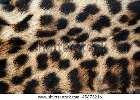 Real Leopard Fur - stock photo