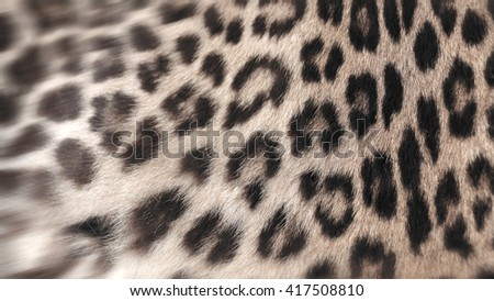 Real Leopard fur closeup for background user