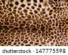 Real Leopard Skin. - stock photo