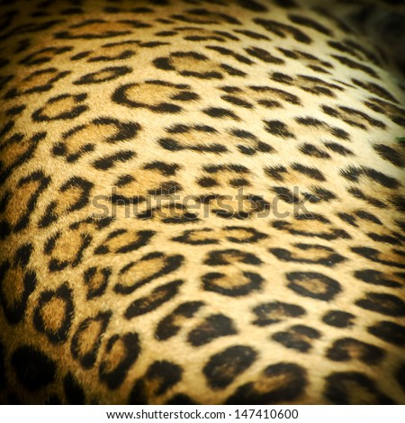 Real leopard skin spots,can be used for background - stock photo