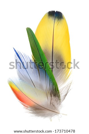 Real MACAW bird Feathers. Natural colors.  Isolated on white background.  - stock photo