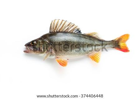 real natural freshwater fish. - stock photo