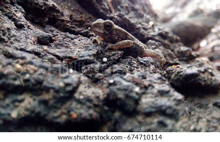Real nature outdoor frog image