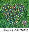 real rose flowers arranging in heart shape on vertical wall - stock photo