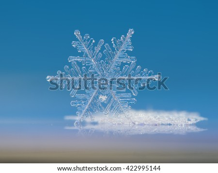 Real snowflake macro photo: Cloud number nine. This is very big fernlike dendrite snow crystal, standing on edge against bright blue background. - stock photo