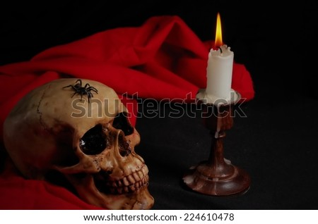 Real spider crawling on skull with candle, with black and red background. Halloween and Gothic scene - stock photo