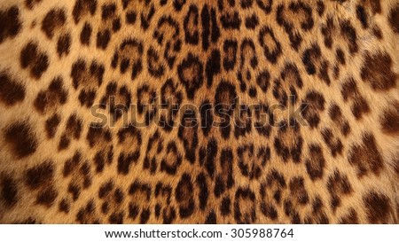 Real tiger fur. leopard skin texture background. - stock photo