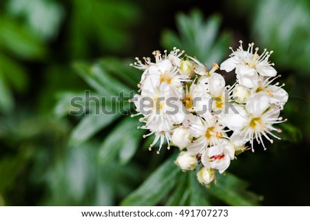 Real white flower in bloom with a heart shape