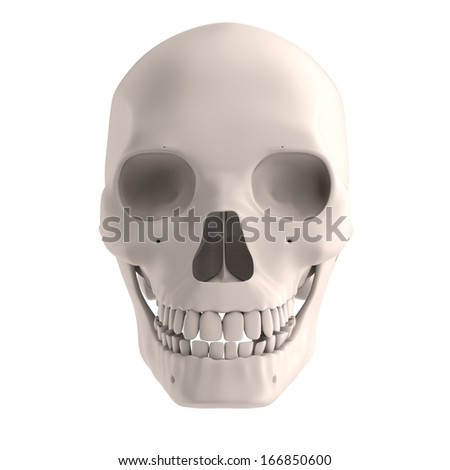 realistic 3d render of male skull