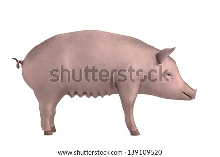 realistic 3d render of pig